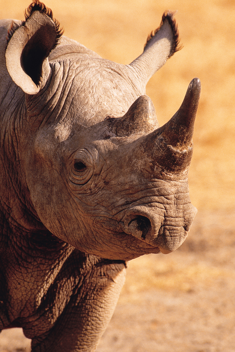 blackrhino2